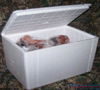 Packed Pheasant Cooler